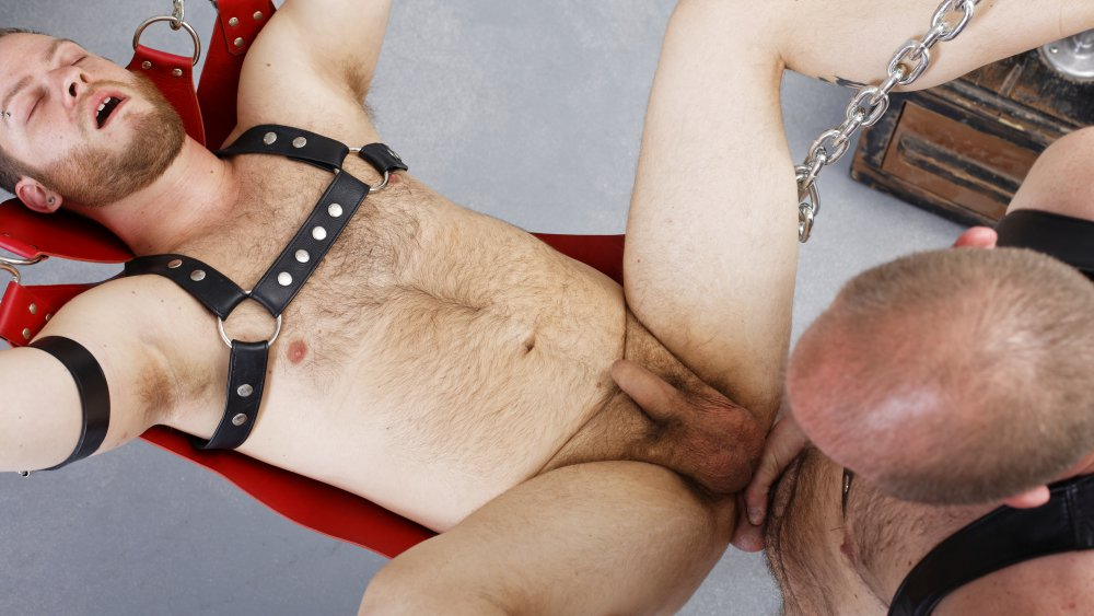 Bear Steven and Phil Mehup - BarebackThatHole Red head bondage hentai